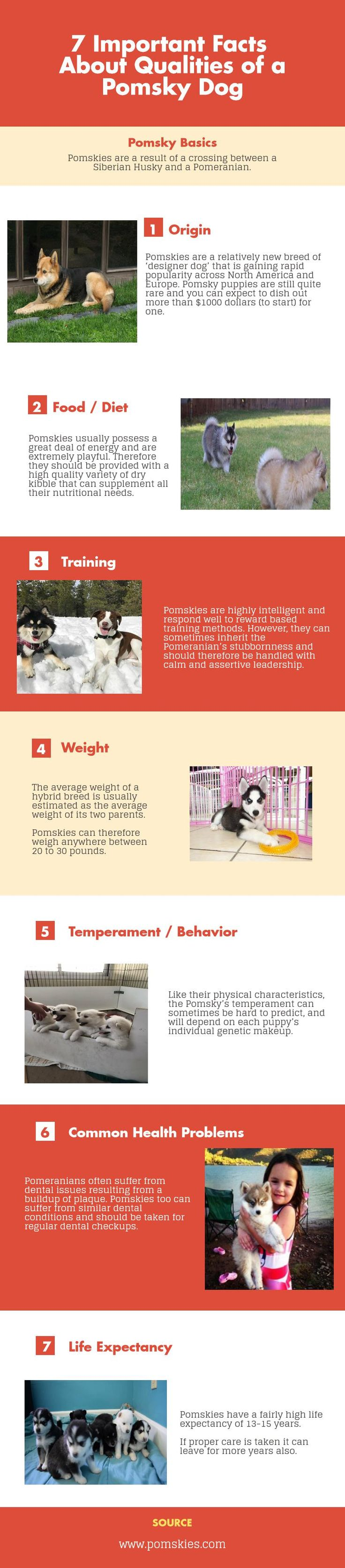 7 Important Facts About Qualities of a #Pomsky Dog  Pomskies #dogs are designer dog breed. Pomsky Dogs are famous in Europe and America. Pomsky Dogs are highly intelligent and respond well if training provided. Life of a Pomsky dog is of around 13 to 15 Years approx.  http://www.pomskies.com/