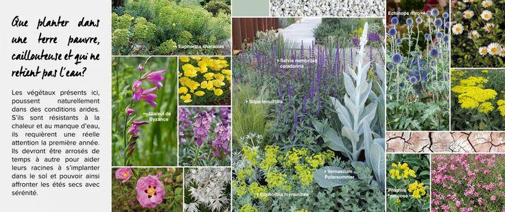 [Terrain sec] Sélection de végétaux et de plantes pour votre terrain sec - jardin sec