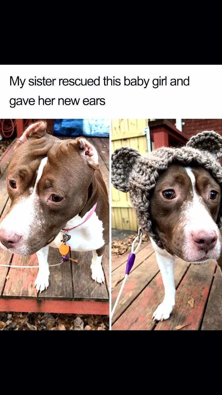 Bahahahaha Dog Memes So Funny Dog Meme Couch Exploded in