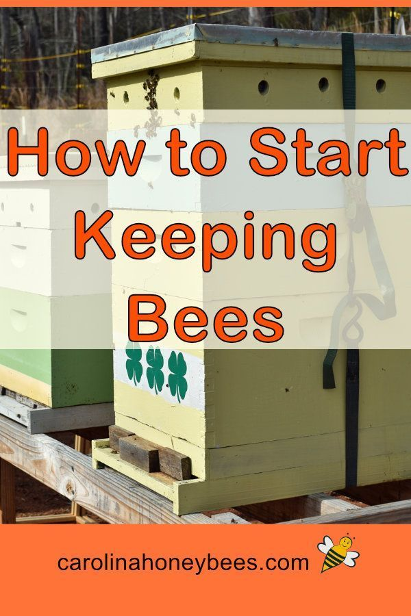 How to Start Beekeeping in 2020 (With images) | Backyard ...