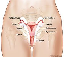 Have you done your research on ovarian, fallopian tube, and primary peritoneal cancer? Learn all about them from the National Cancer Institute and stay healthy and well. #WomensHealth