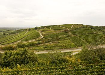 Oberrottweiler Eichberg, a Great Pinot Noir from SALWEY. Germany