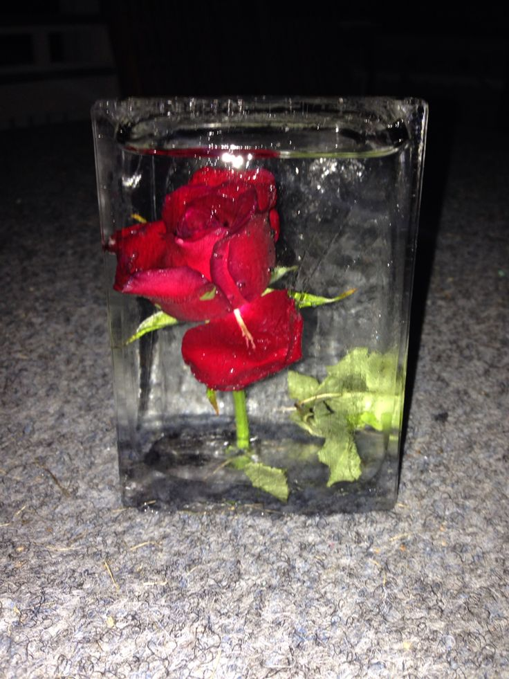 Jäädytetty ruusu