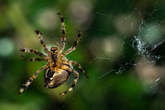Timelapse: A spider spins its web. 1h 30' shooting, one picture every four seconds