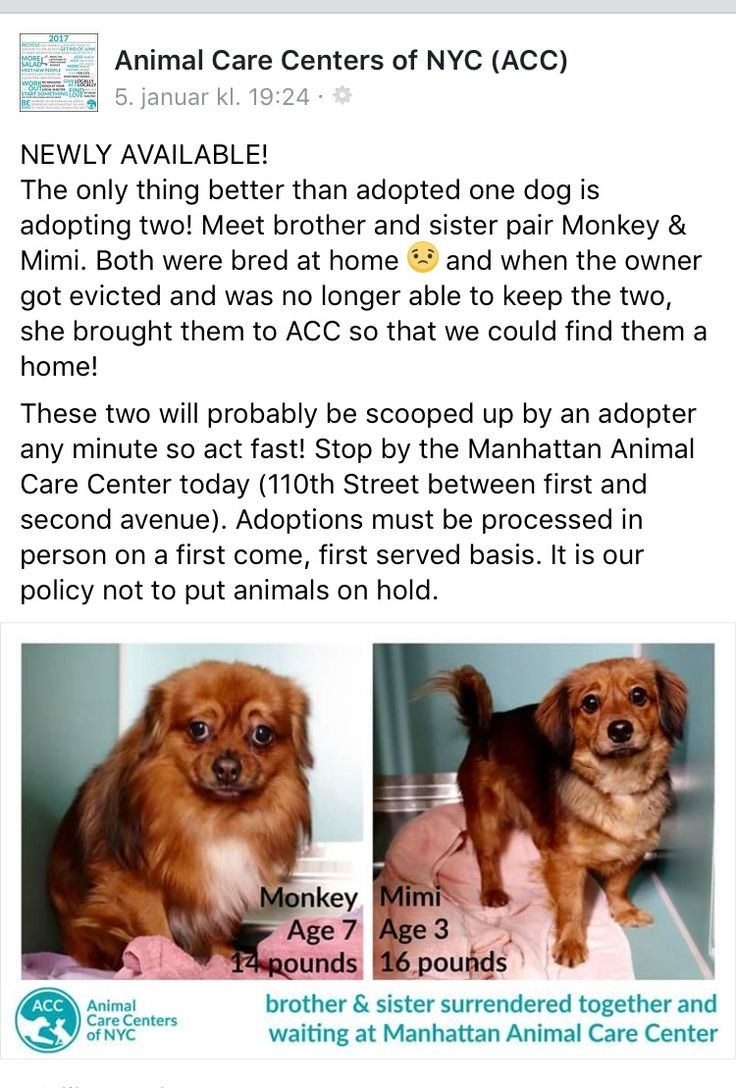 1/8/17 NYC ACC !! BROTHER AND SISTER!! PLEASE SHARE!! /ij https://m.facebook.com/story.php?story_fbid=1287767474600388&substory_index=0&id=125204517523362&__tn__=%2As