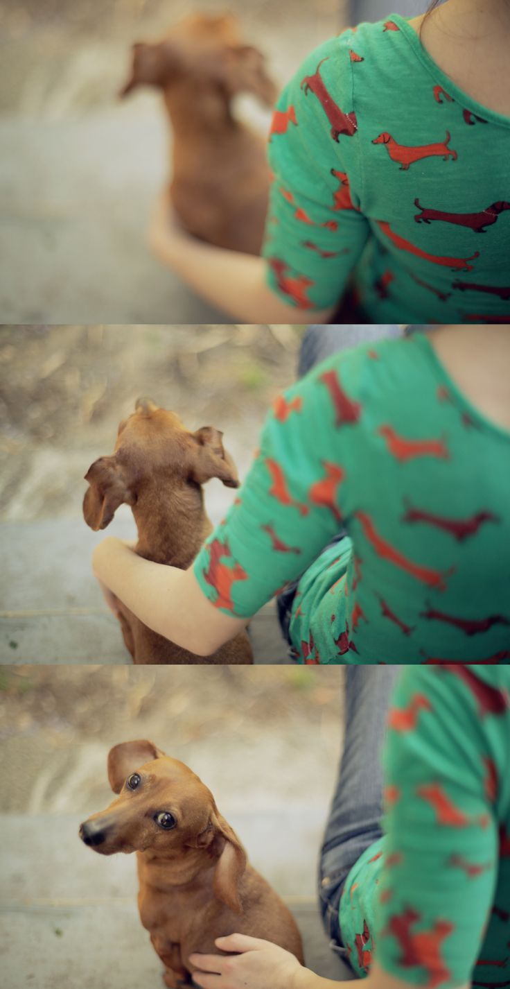 .I love dachshunds! || www.kaylee-daily.com ||.