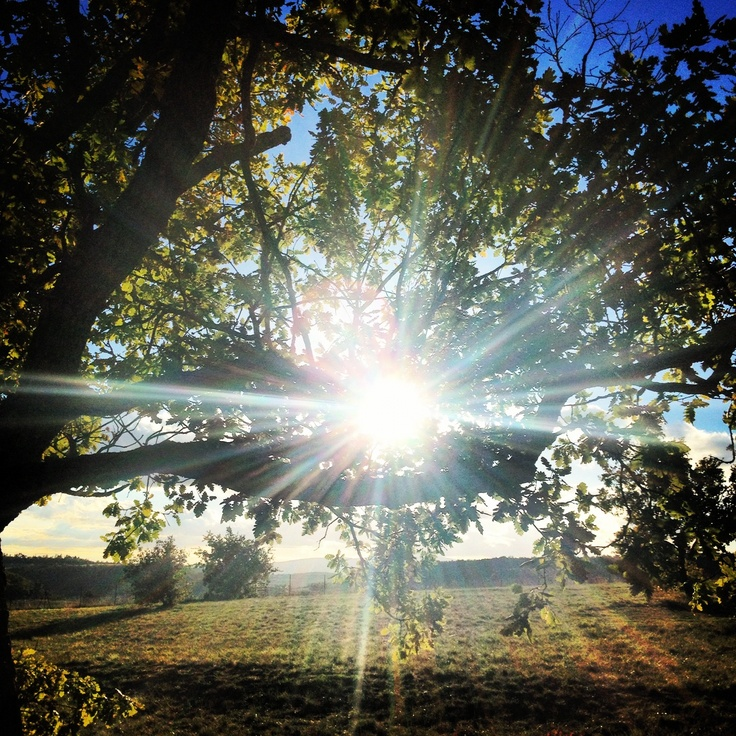 поликарбоната защитит как фотографировать природу солнце день малинового