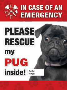 emergency sticker please rescue my (black) pug. Get yours today and proceeds benefit the pugs in rescue at Pug Rescue Network