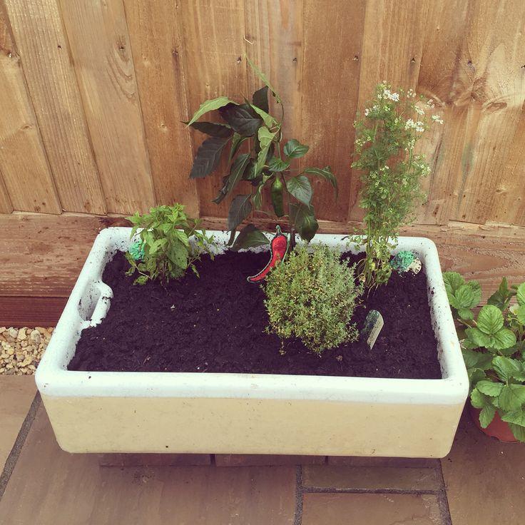 Love my herb garden in an old Belfast sink #chilli #corriander #mint #thyme #basilseeds