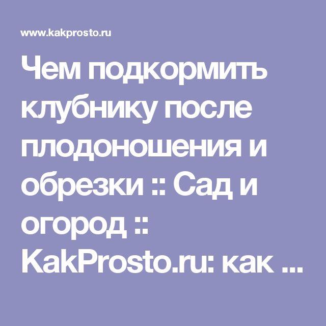 Чем подкормить клубнику после плодоношения и обрезки :: Сад и огород :: KakProsto.ru: как просто сделать всё