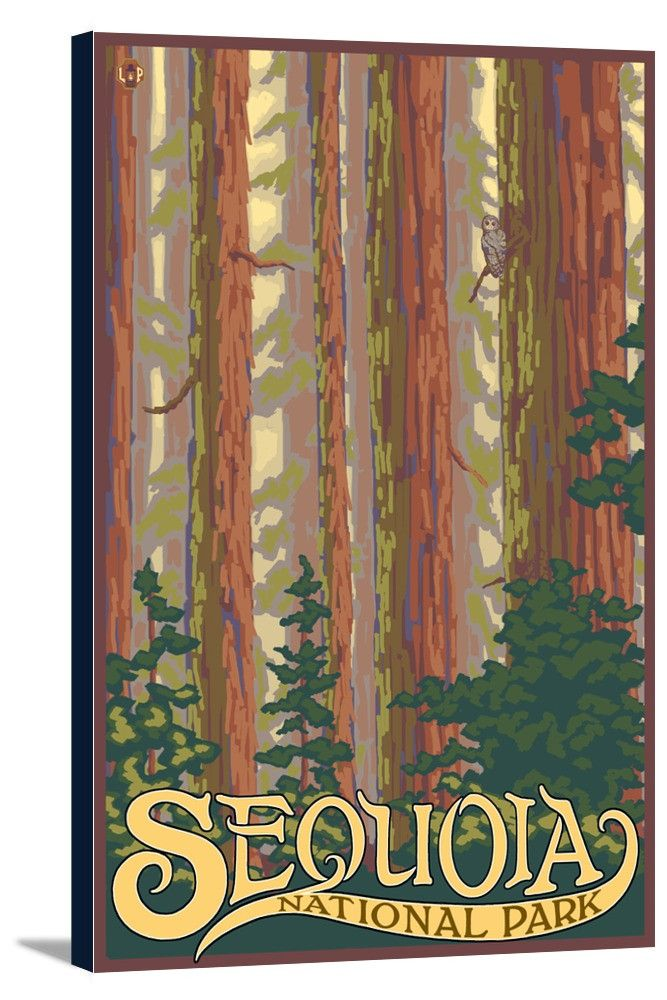 California Map Sequoia National Park%0A Sequoia National Park  California  Forest View  Lantern Press Artwork