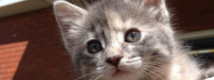Angels Of Hope Animal Rescue, Esterhazy Sk and District in Esterhazy, Saskatchewan website link on http://www.bestcatanddognutrition.com/roger-biduk/canadian-animal-rescues-shelters/; Roger Biduk