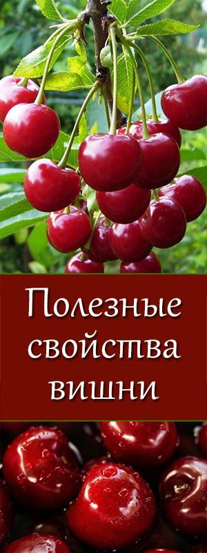 Польза вишни и черешни. Как обычная вишня благотворно влияет на здоровье  питание, пп, зож, похудение, диеты, снизить вес, правильные продукты, питание для похудения, правильное питание, полезное питание, здоровое питание, сбалансированное питание