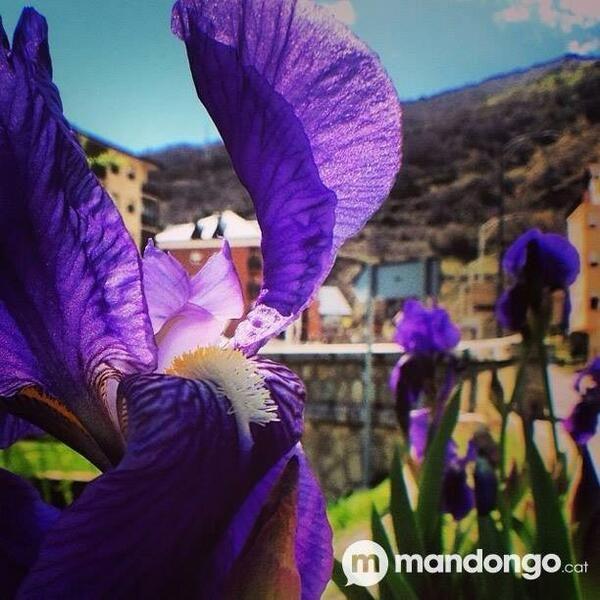 La primavera és viva a #Sort