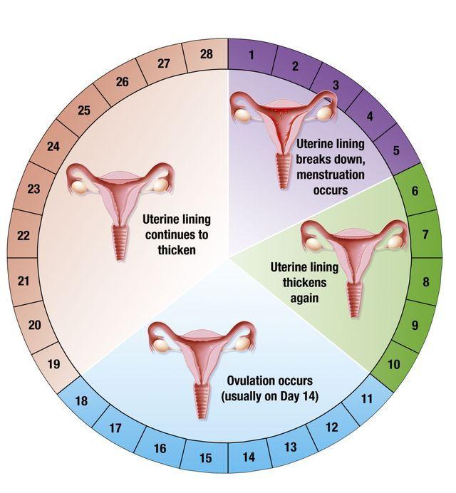 ¿Qué ocurre en tu cuerpo la primera semana de embarazo? Información y consejos para cuidar de tu embarazo semana a semana, empezando con la semana 1 de embarazo