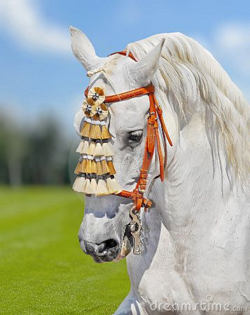 Horses board:  http://pinterest.com/christie773/tack-room/Grey andalusian horse spanish decoration