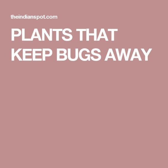 PLANTS THAT KEEP BUGS AWAY