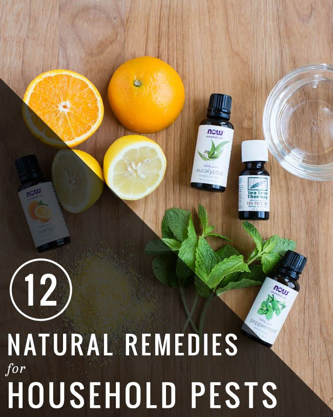 12 Natural Remedies for Household Pests | http://hellonatural.co/natural-remedies-household-pests/