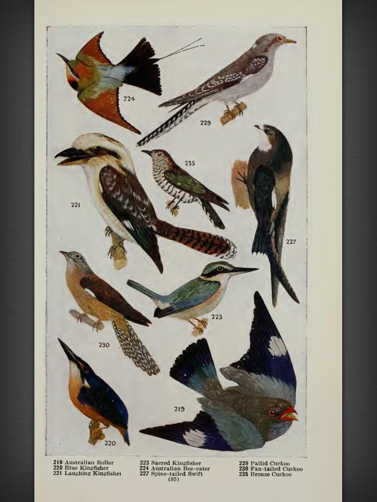 An Australian Bird Book, 1918