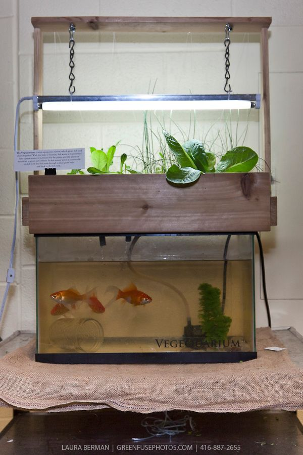 Indoor gardening systems vegequarium a compact indoor for Fish and plants in aquaponics