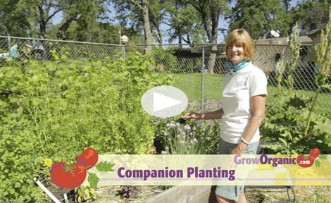 Companion Planting at www.GrowOrganic.com