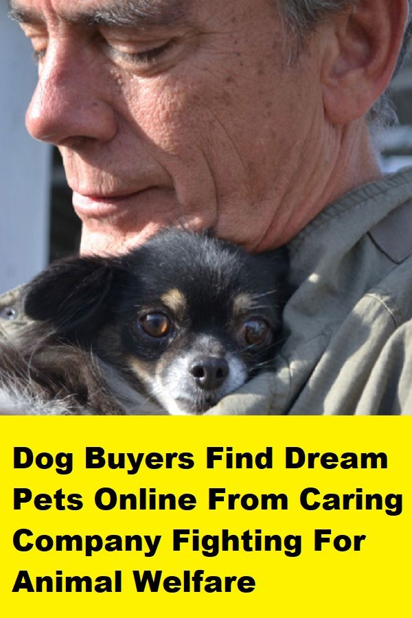 Dog Buyers Find Dream Pets Online From Caring Company Fighting For Animal Welfare Dogs Pets Online Pets