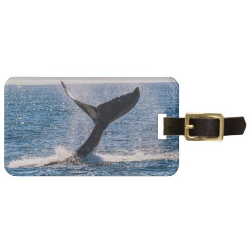 This luggage tag features a Humpback Whale slapping its huge tail fluke in the waters off Surfer's Paradise, Australia. #whale #humpback #tailfluke #ocean #sea #migration #wildlife #nature