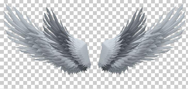 Drawing Photography Picsart Photo Studio Png Angel Wing Art Beak Black And White Desktop Wallpap Angel Wings Drawing Drawings Photography Wings Wallpaper