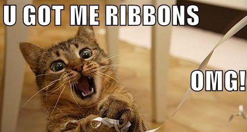 Cat Y Ribbons Meme