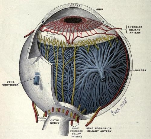 Ocular Anatomy Coloring Book : 244 best ophtalmology images on pinterest