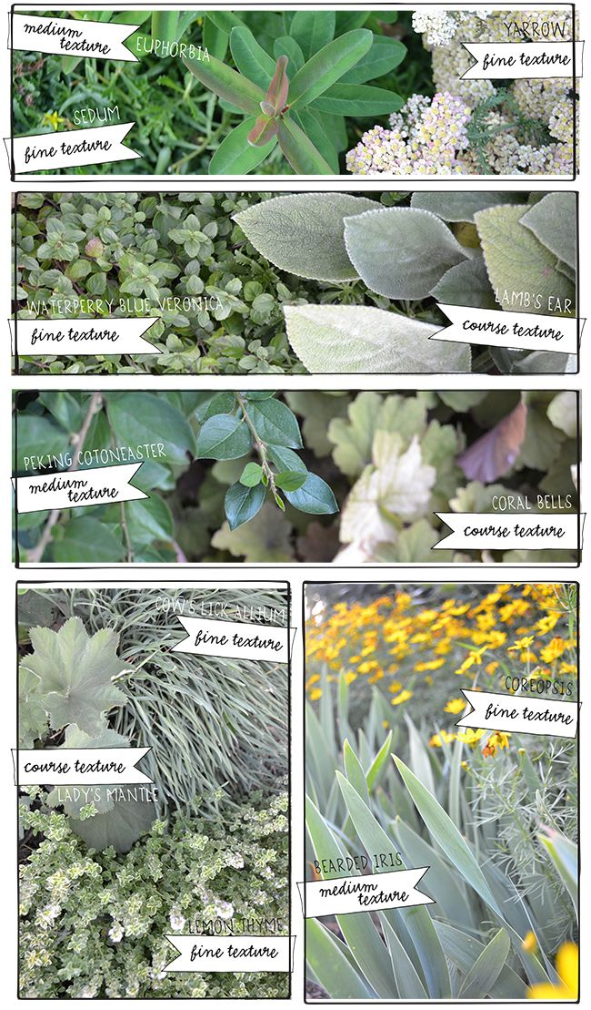Plant textures from Lisa Orgler Design
