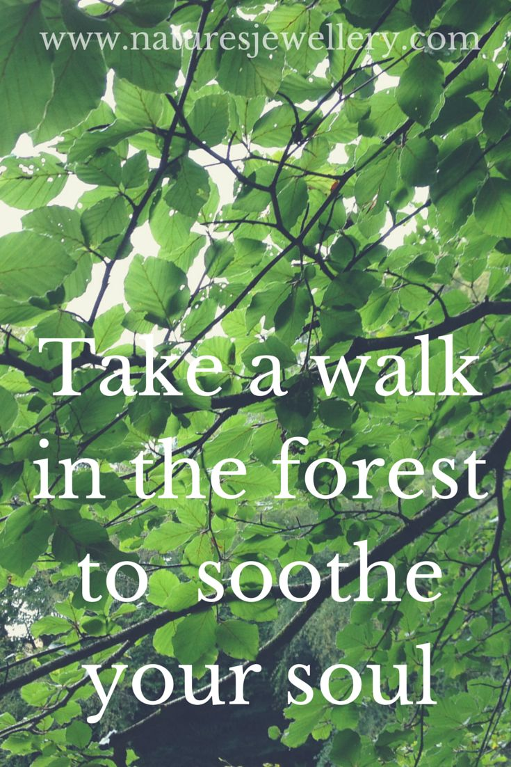 Take A Walk Through The Forest To Soothe Your Soul Find A Pixie And