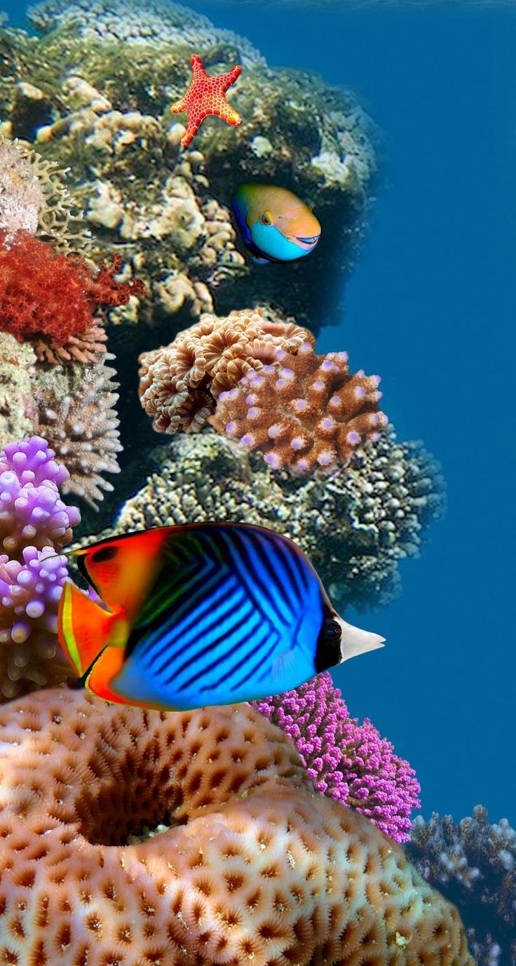 Fish aquarium business - Desktop Aquarium Iphone 5s Wallpaper