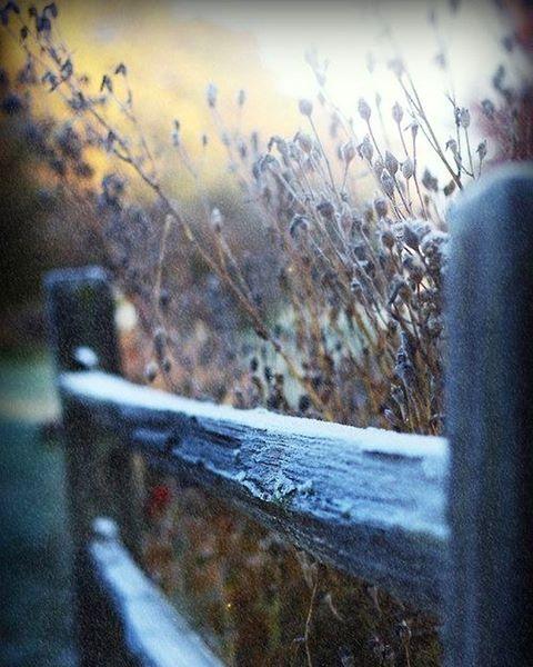 ✨ #cirkusflora #garden #dream #flowers #plants #details #home #light #view #green #white #trädgård #blommor #växter #winter #frost #wintergarden