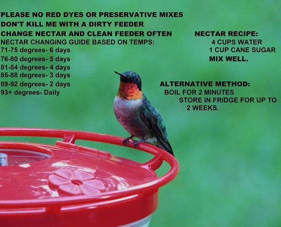 When to change Hummingbird nectar.