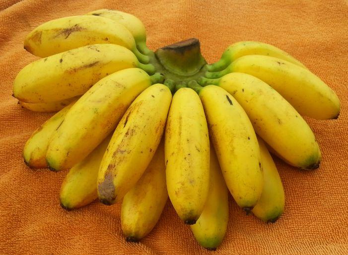 Thailändische Mini-Bananen