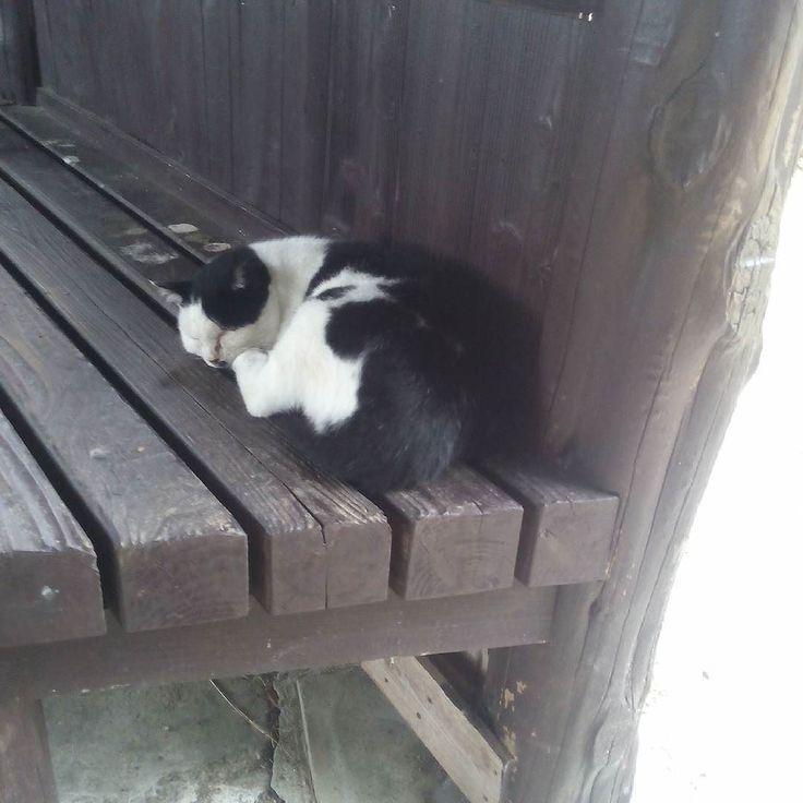眠り猫  おじゃましてごめんね  #猫#明石城#cat#眠り猫