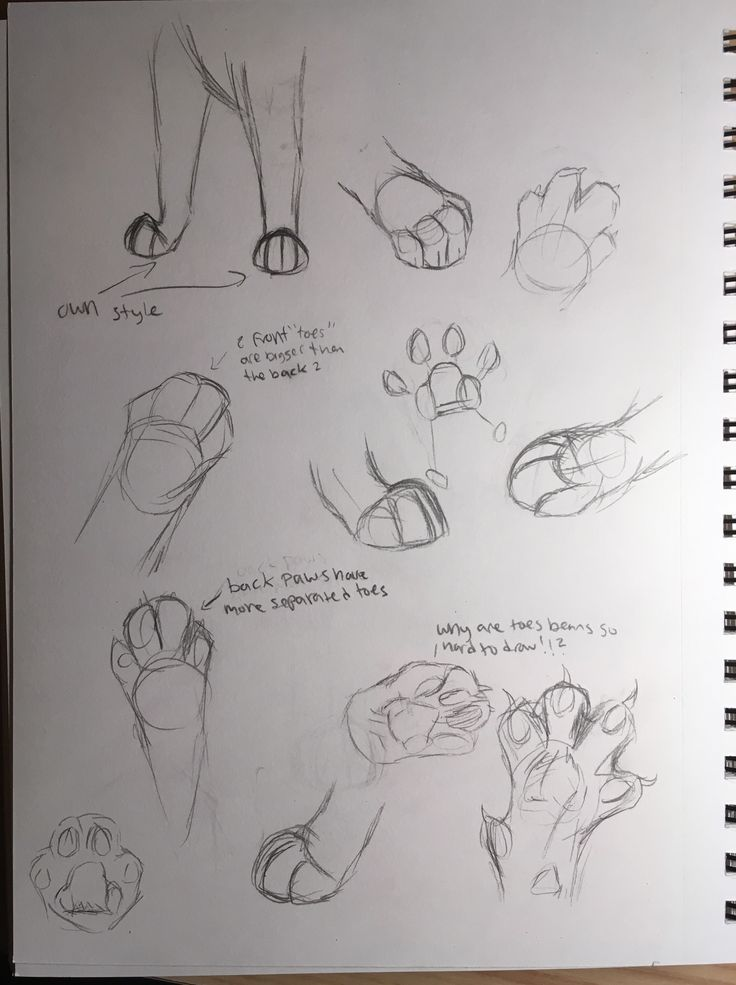 Cat paw practice, cuz it's imPAWsible for me to draw them right