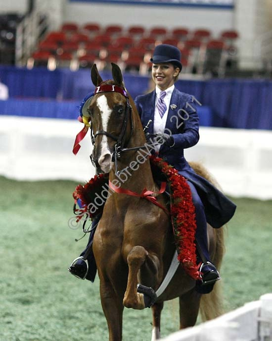 WCC CH Brookhill's King of Kool...American Saddlebred