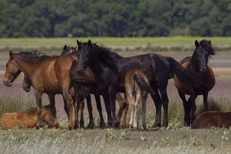 Wild horses roaming in Danube Delta's Letea Forest. Image by Aldo Pavan / Lonely Planet Images / Getty Images