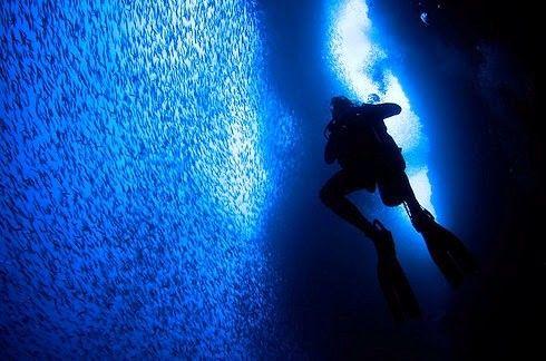 30 raros e deslumbrantes fenômenos naturais - Isso é o que acontece quando milhões de sardinhas migram para o norte ao longo da costa leste da África do Sul.