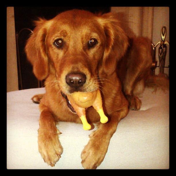 Beautiful Melachi, Mika's dog!