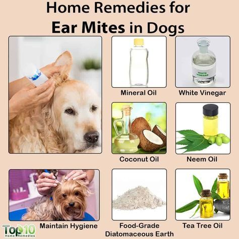 Home Remedies For Ear Mites In Dogs Dog Remedies Natural Health Remedies Health Remedies