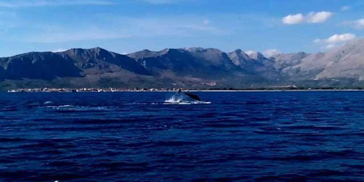 ΒΙΝΤΕΟ: Δεκάδες δελφίνια στο στενό μεταξύ Μύτικα και Καλάμου Λευκάδας!