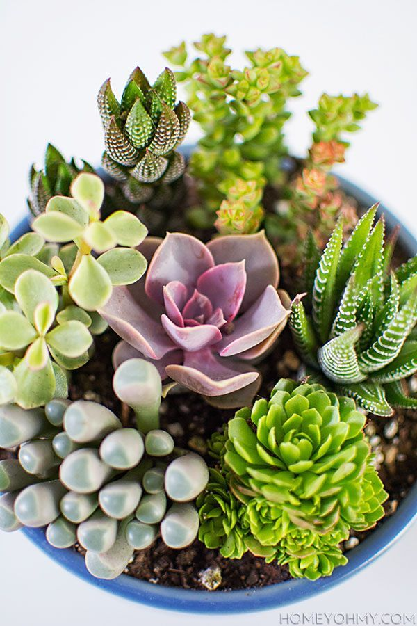 Una bonita forma de lucir tus macetas es colocando diferentes clases de plantas. www.quintaencinos.com