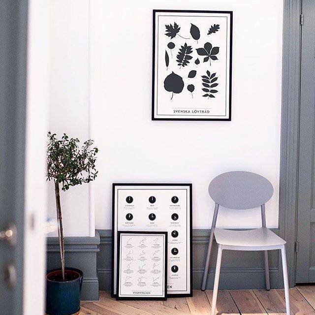 För er vetgiriga och vill pryda väggarna med snygga prints- Kunskapstavlan har många fina i vår webbshop att kombinera med varandra! . . #inredningsspecialisten #vardagsrum #kök #löv #tapet #natur #inredning #interiör #svenskdesign #swedishdesign #nordicdesign #scandinaviandesign #nordicinspiration #interiør #heminredning #inredningsdetaljer #hem #sovrum #hemma #mitthem #mitthjem #vakrehjem #hemmahosmig #poster #kunskap #lantligthem #hemmahososs #vakrehjemoginteriør #boligpluss