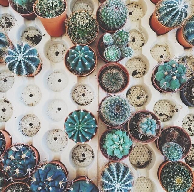 Cute cacti (who you can forget about, sometimes...)