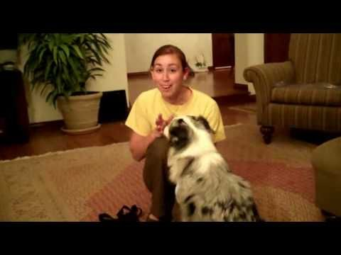 corny girl shows how to keep your dog from going ballistic about the doorbell