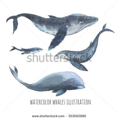 Watercolor whale set. Hand drawn humpback whales, blue whale and bowhead whale isolated on white background. Realistic ocean mammal animals illustrations