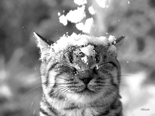 Neve neve .. ormai sciolta